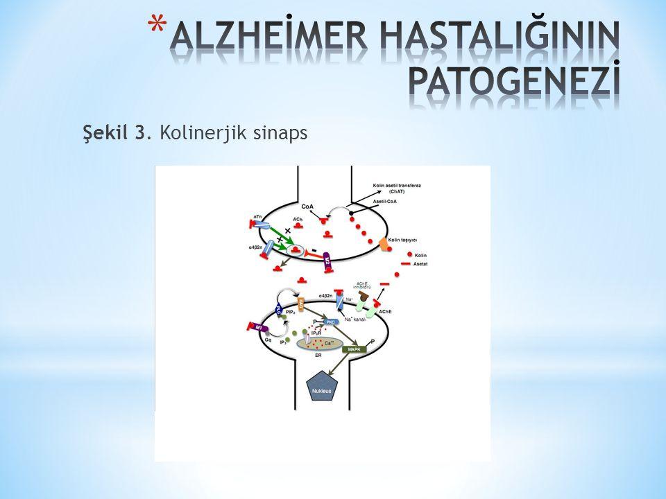Şekil 3. Kolinerjik sinaps