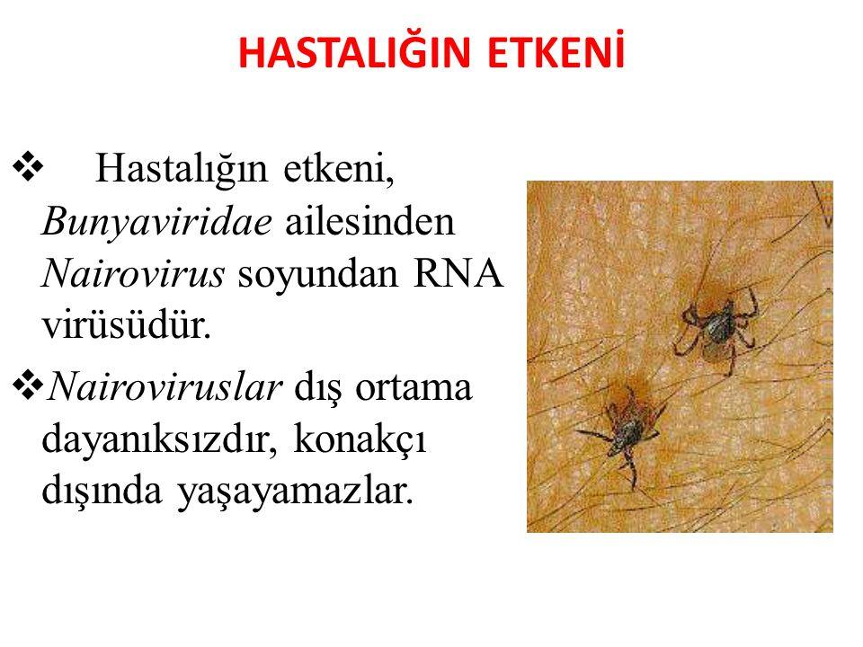 HASTALIĞIN ETKENİ  Hastalığın etkeni, Bunyaviridae ailesinden Nairovirus soyundan RNA virüsüdür.  Nairoviruslar dış ortama dayanıksızdır, konakçı dı