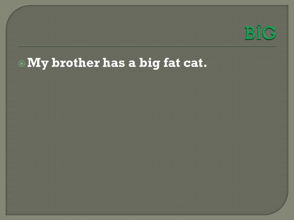  My brother has a big fat cat.