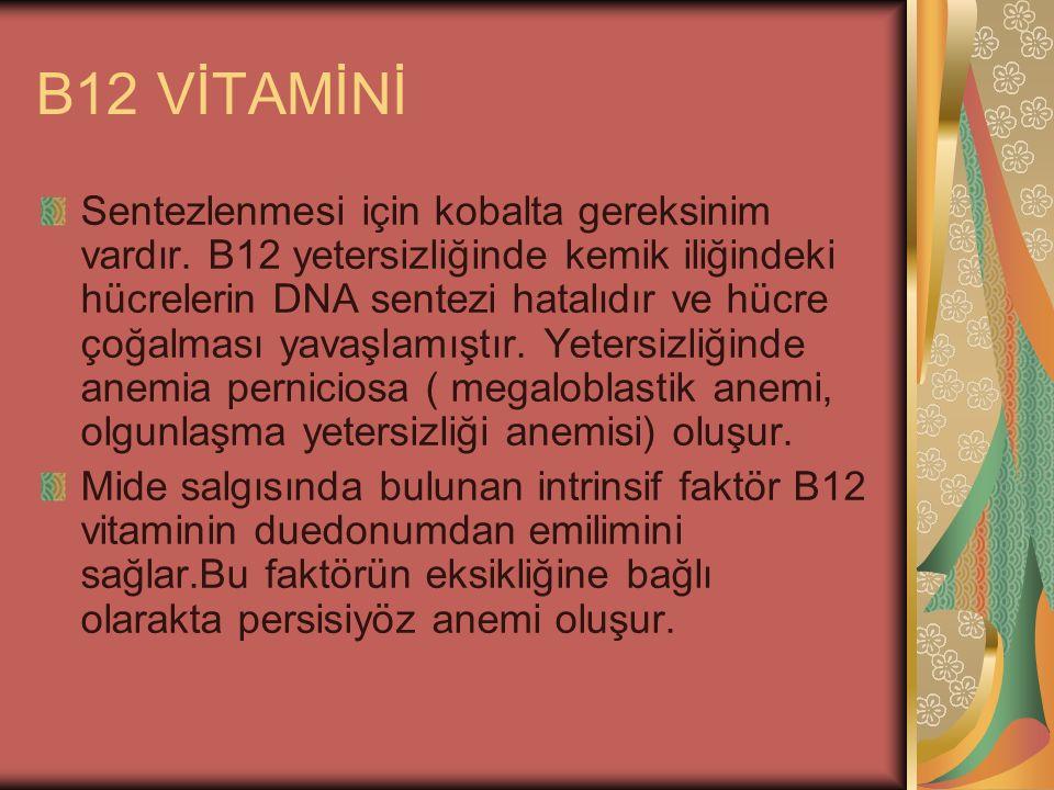 B12 VİTAMİNİ Sentezlenmesi için kobalta gereksinim vardır. B12 yetersizliğinde kemik iliğindeki hücrelerin DNA sentezi hatalıdır ve hücre çoğalması ya