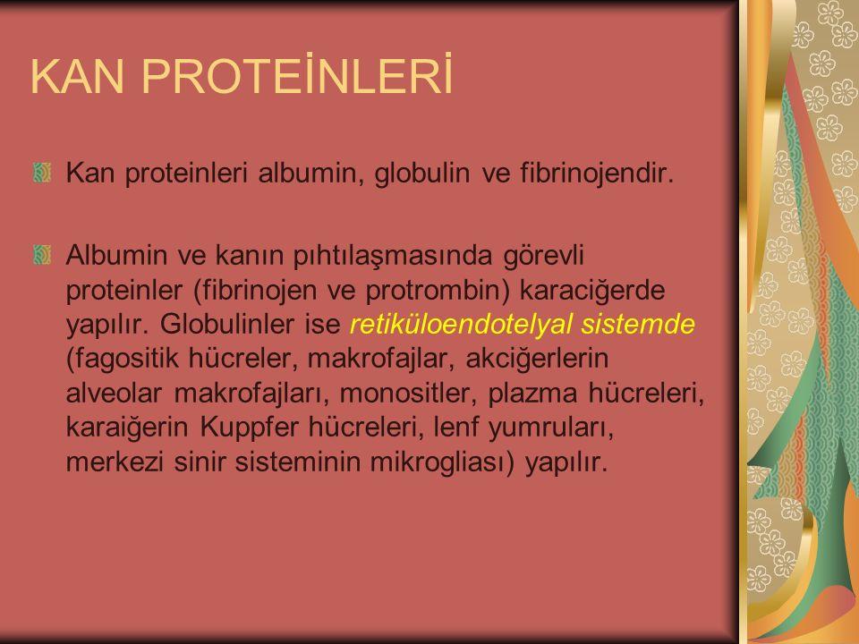 KAN PROTEİNLERİ Kan proteinleri albumin, globulin ve fibrinojendir. Albumin ve kanın pıhtılaşmasında görevli proteinler (fibrinojen ve protrombin) kar