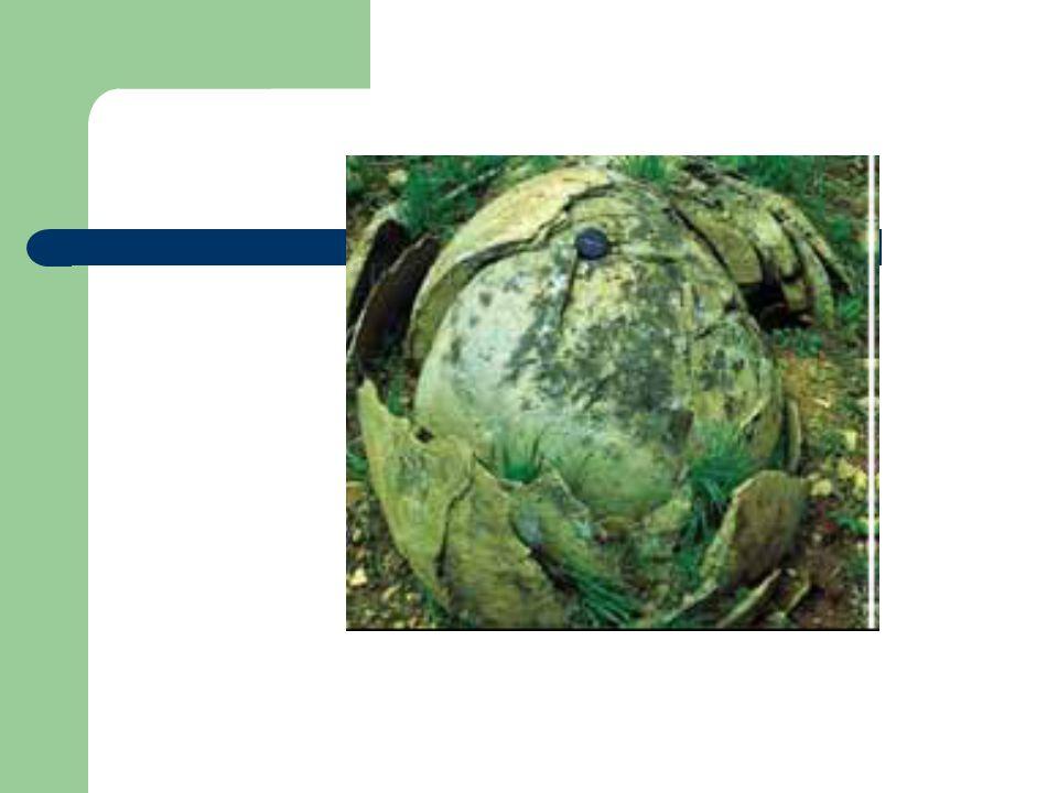 En üstte yer alır.Organik maddeler bakımından zengin ve genellikle koyu renklidir.