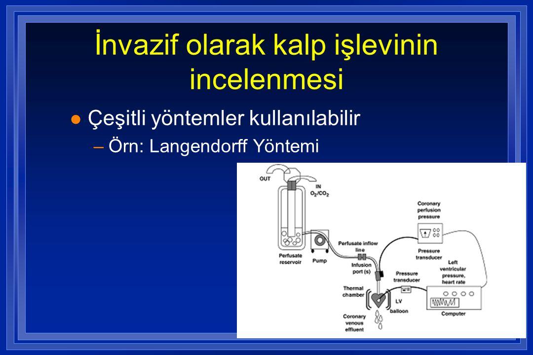 İnvazif olarak kalp işlevinin incelenmesi l Çeşitli yöntemler kullanılabilir –Örn: Langendorff Yöntemi
