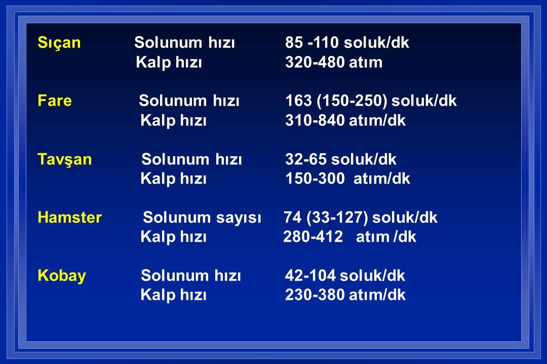 Sıçan Solunum hızı 85 -110 soluk/dk Kalp hızı 320-480 atım Fare Solunum hızı 163 (150-250) soluk/dk Kalp hızı 310-840 atım/dk Tavşan Solunum hızı 32-65 soluk/dk Kalp hızı 150-300 atım/dk Hamster Solunum sayısı 74 (33-127) soluk/dk Kalp hızı 280-412 atım /dk Kobay Solunum hızı 42-104 soluk/dk Kalp hızı 230-380 atım/dk