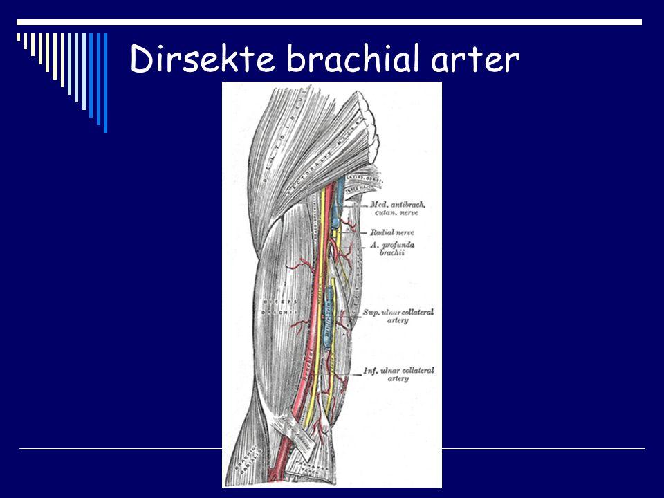 Dirsekte brachial arter