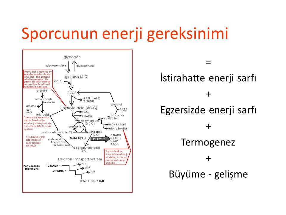 Sporcunun enerji gereksinimi = İstirahatte enerji sarfı + Egzersizde enerji sarfı + Termogenez + Büyüme - gelişme