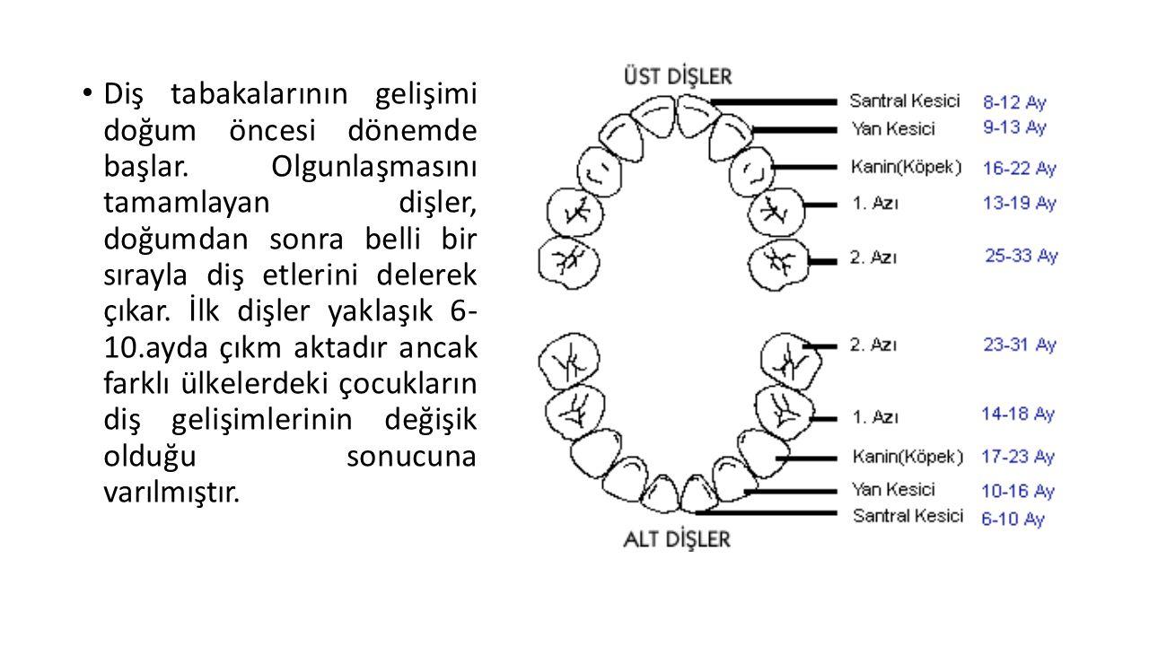 Diş tabakalarının gelişimi doğum öncesi dönemde başlar. Olgunlaşmasını tamamlayan dişler, doğumdan sonra belli bir sırayla diş etlerini delerek çıkar.