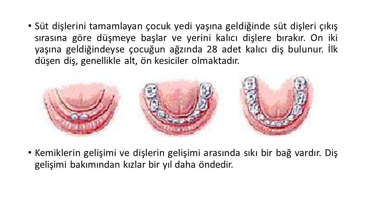 Süt dişlerini tamamlayan çocuk yedi yaşına geldiğinde süt dişleri çıkış sırasına göre düşmeye başlar ve yerini kalıcı dişlere bırakır. On iki yaşına g