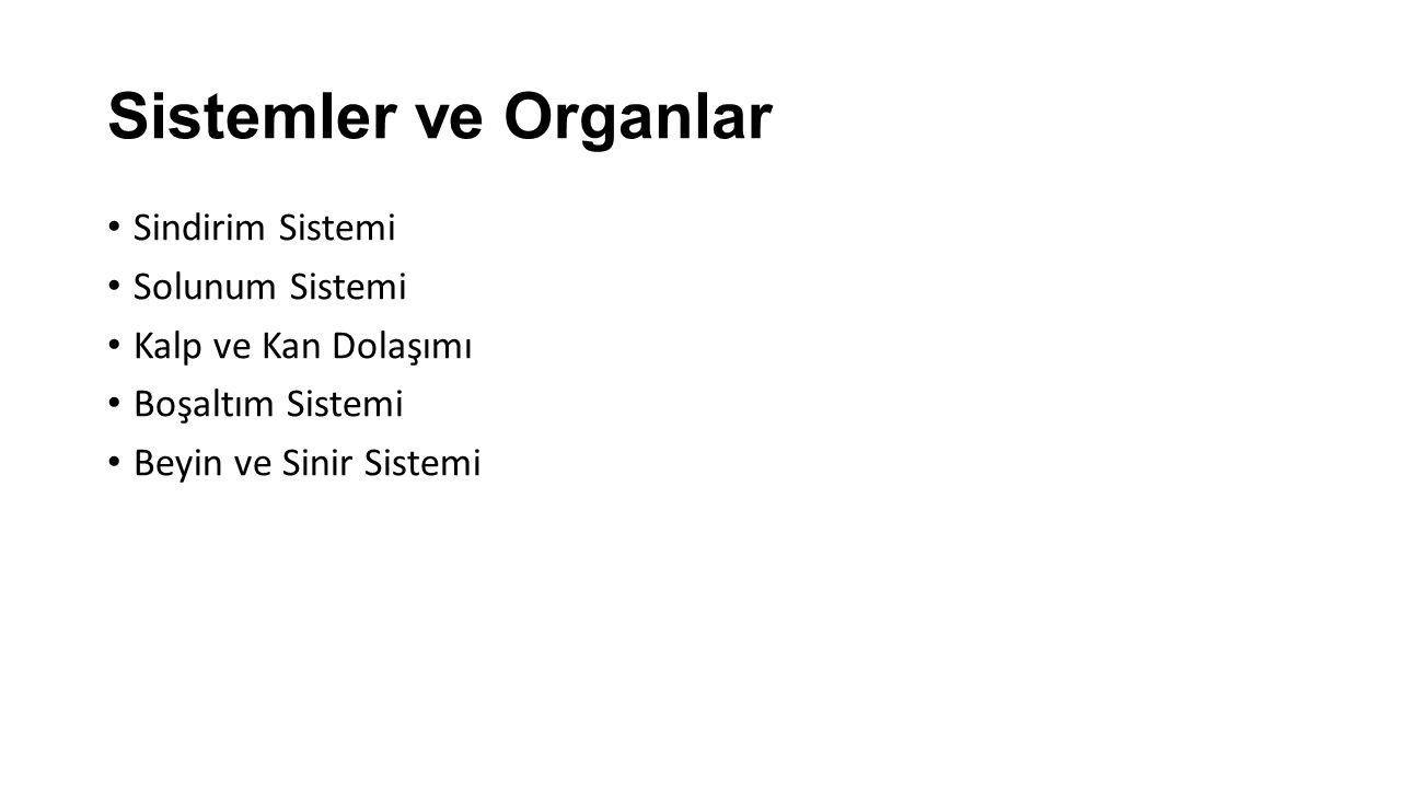 Sistemler ve Organlar Sindirim Sistemi Solunum Sistemi Kalp ve Kan Dolaşımı Boşaltım Sistemi Beyin ve Sinir Sistemi