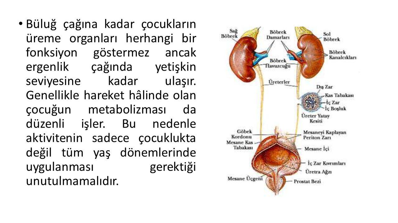 Büluğ çağına kadar çocukların üreme organları herhangi bir fonksiyon göstermez ancak ergenlik çağında yetişkin seviyesine kadar ulaşır. Genellikle har