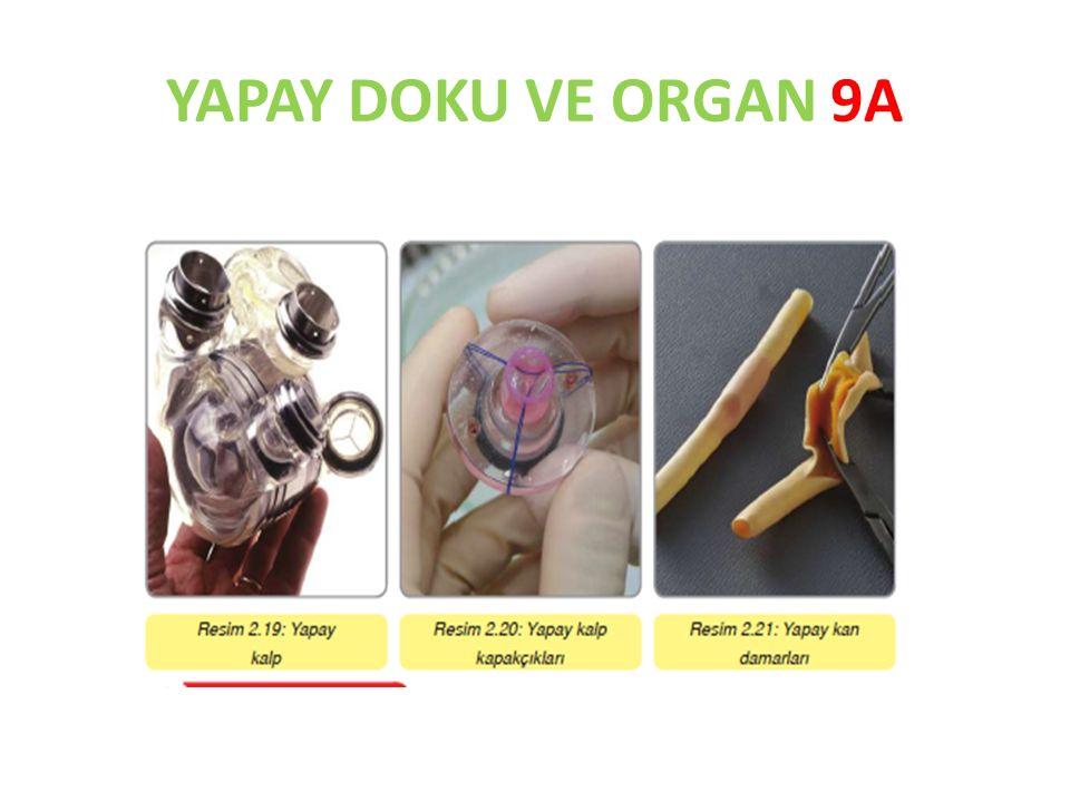 YAPAY DOKU VE ORGAN 9A