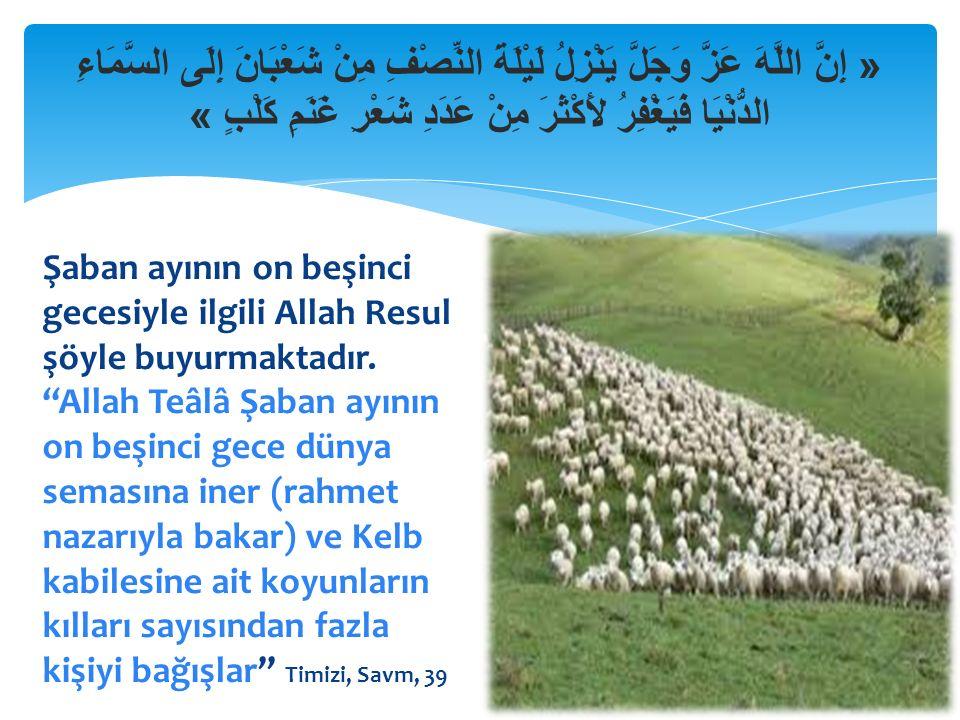 « إِنَّ اللَّهَ عَزَّ وَجَلَّ يَنْزِلُ لَيْلَةَ النِّصْفِ مِنْ شَعْبَانَ إِلَى السَّمَاءِ الدُّنْيَا فَيَغْفِرُ لأَكْثَرَ مِنْ عَدَدِ شَعْرِ غَنَمِ كَلْبٍ » Şaban ayının on beşinci gecesiyle ilgili Allah Resul şöyle buyurmaktadır.