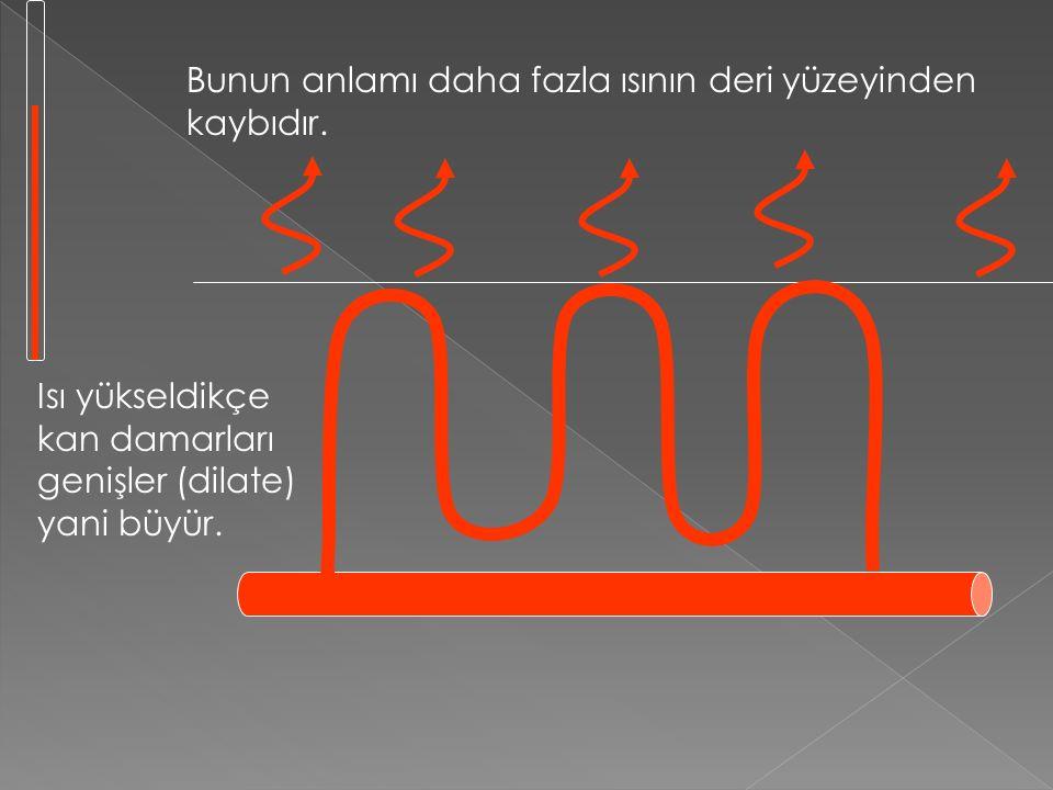 Vücudu soğutmak için hangi mekanizmalar bulunur? 2. Vazodilasyon (Damar genişlemesi) Kanınız vücudunuzda ısı enerjisinin çoğunu taşımaktadır. Kanınız