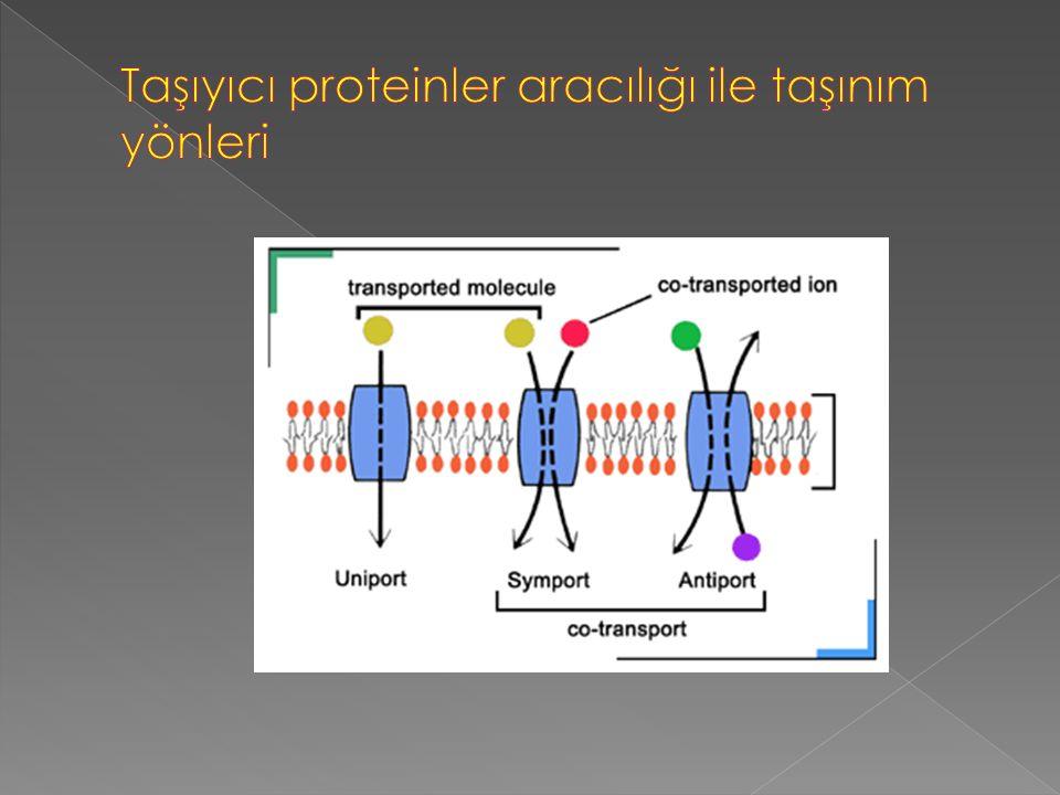  Pasif taşımanın tam tersi olarak aktif taşımada moleküller az yoğun oldukları ortamdan çok yoğun oldukları ortama enerji harcanarak taşınırlar. Akti