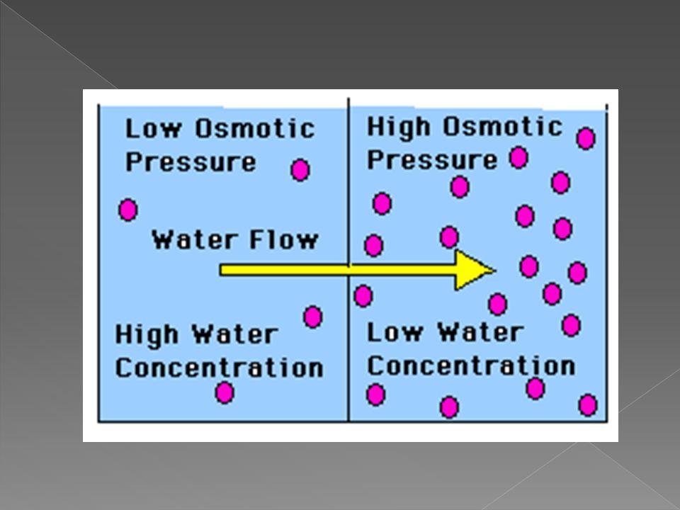  Su moleküllerinin yarı geçirgen zardan yoğun ortam tarafına geçişi ozmoz olarak bilinir.  Su moleküllerinin geçişi, zarın iki tarafındaki sıvıların