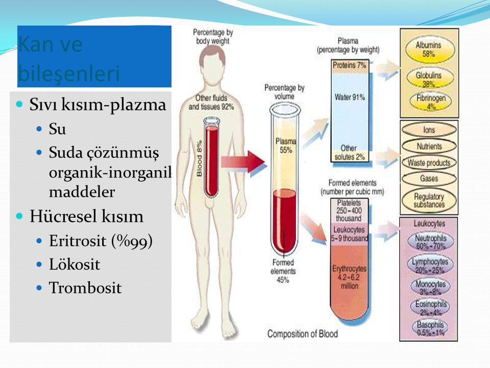 Kan ve bileşenleri Sıvı kısım-plazma Su Suda çözünmüş organik-inorganik maddeler Hücresel kısım Eritrosit (%99) Lökosit Trombosit