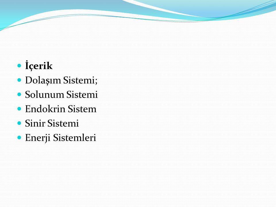 İçerik Dolaşım Sistemi; Solunum Sistemi Endokrin Sistem Sinir Sistemi Enerji Sistemleri