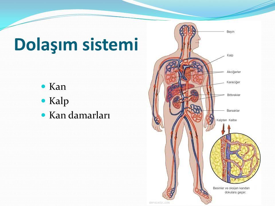 Dolaşım sistemi Kan Kalp Kan damarları