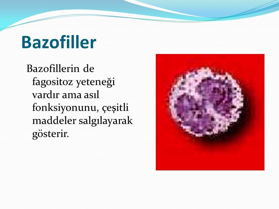 Bazofiller Bazofillerin de fagositoz yeteneği vardır ama asıl fonksiyonunu, çeşitli maddeler salgılayarak gösterir.