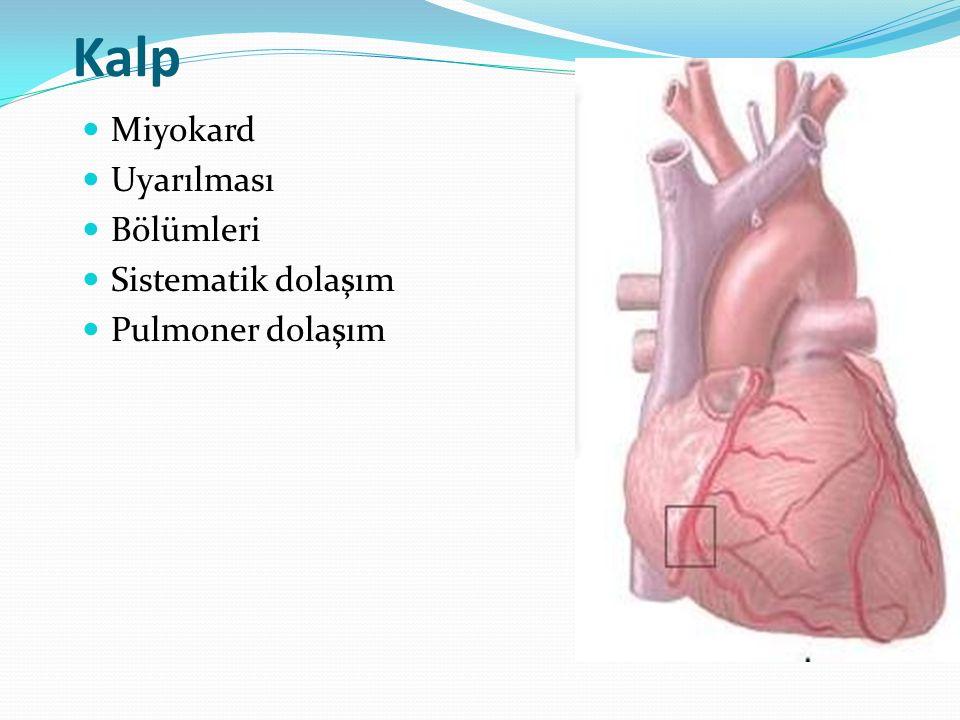 Miyokard Uyarılması Bölümleri Sistematik dolaşım Pulmoner dolaşım
