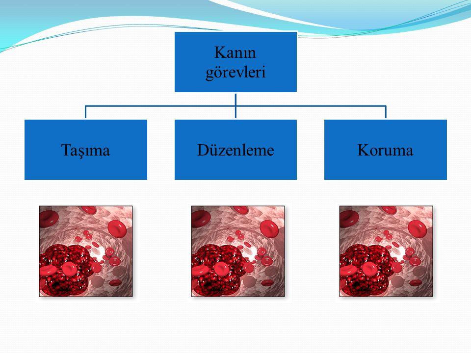 ERİTROSİT ÜRETİMİNİN STİMÜLASYONU ERİTROPOETİN Böbreklerden üretilen glikoprotein yapıda olan, eritrosit üretimini asıl stimüle eden hormundur.