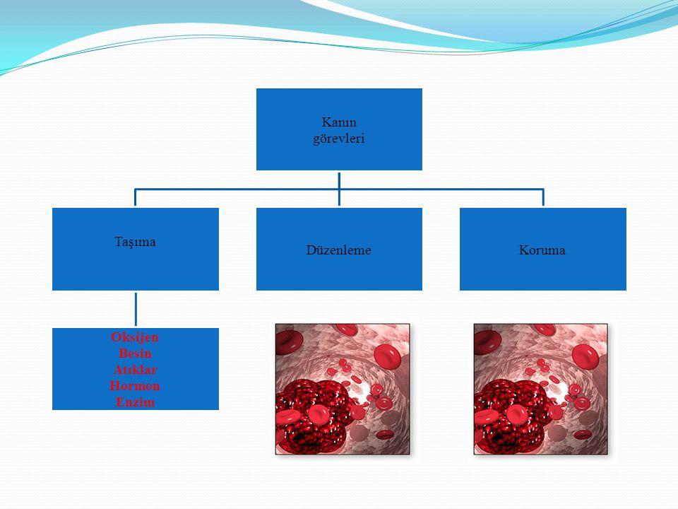 Kanın görevleri Taşıma Oksijen Besin Atıklar Hormon Enzim Düzenleme Vücut sıcaklığı pH Vücut sıvı hacimleri Koruma