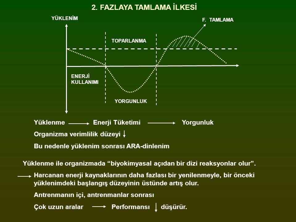 2. FAZLAYA TAMLAMA İLKESİ YÜKLENİM ENERJİ KULLANIMI YORGUNLUK TOPARLANMA F. TAMLAMA YüklenmeEnerji TüketimiYorgunluk Organizma verimlilik düzeyi Bu ne