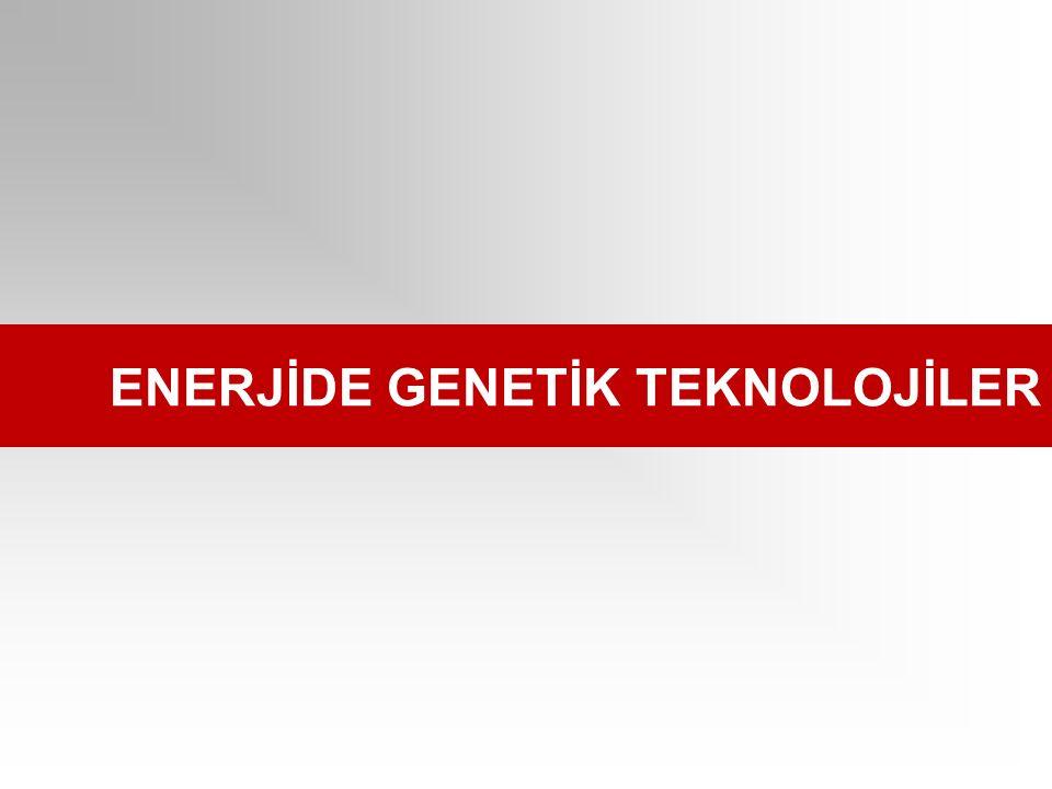 ENERJİDE GENETİK TEKNOLOJİLER