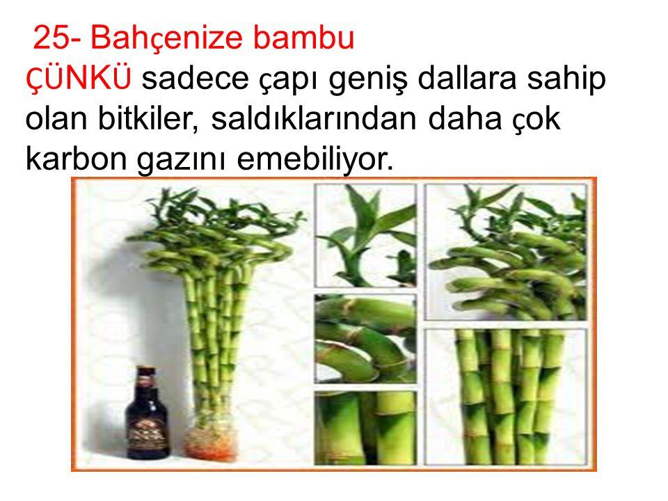 25- Bah ç enize bambu ÇÜ NK Ü sadece ç apı geniş dallara sahip olan bitkiler, saldıklarından daha ç ok karbon gazını emebiliyor.