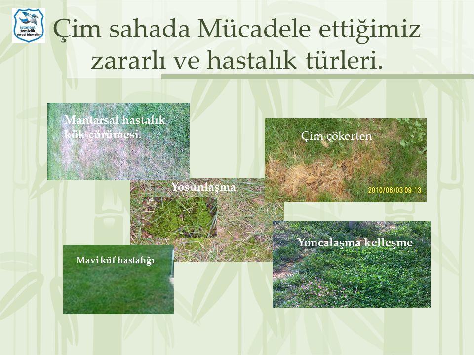 Çim sahada Mücadele ettiğimiz zararlı ve hastalık türleri.