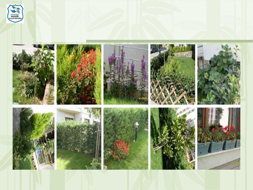 Ortak alan bölgesi bitkilerin kı ş a hazırlık bakım ve dip temizli ğ inden görüntü