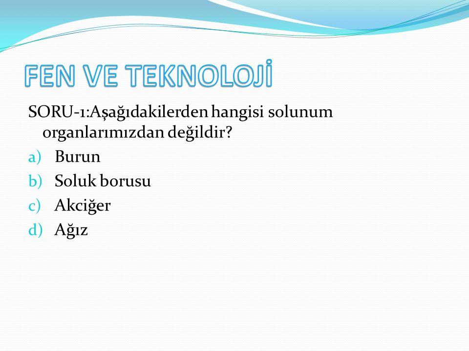 SORU-1:Aşağıdakilerden hangisi solunum organlarımızdan değildir.