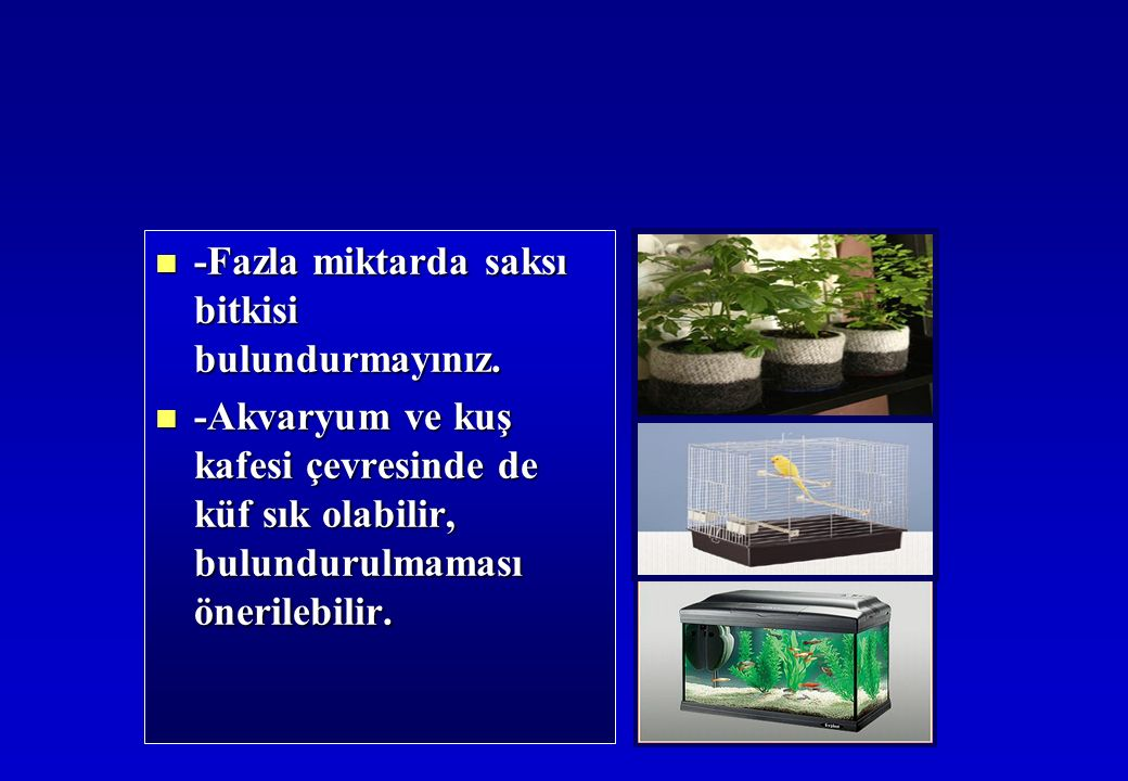 -Fazla miktarda saksı bitkisi bulundurmayınız. -Fazla miktarda saksı bitkisi bulundurmayınız.
