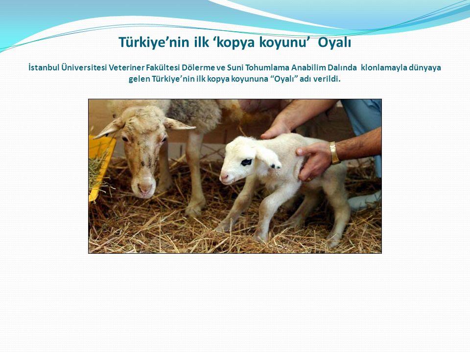 Türkiye'nin ilk 'kopya koyunu' Oyalı İstanbul Üniversitesi Veteriner Fakültesi Dölerme ve Suni Tohumlama Anabilim Dalında klonlamayla dünyaya gelen Türkiye'nin ilk kopya koyununa Oyalı adı verildi.