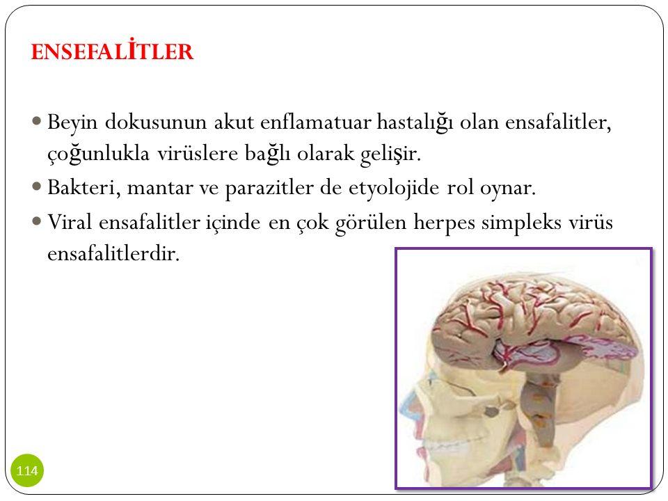 ENSEFAL İ TLER Beyin dokusunun akut enflamatuar hastalı ğ ı olan ensafalitler, ço ğ unlukla virüslere ba ğ lı olarak geli ş ir. Bakteri, mantar ve par