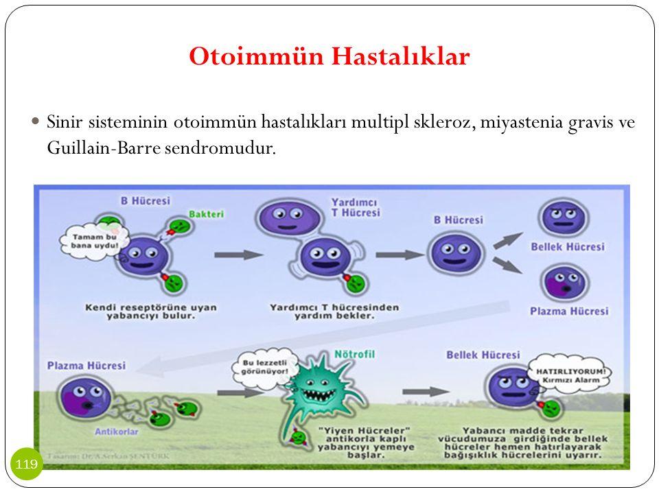 Otoimmün Hastalıklar Sinir sisteminin otoimmün hastalıkları multipl skleroz, miyastenia gravis ve Guillain-Barre sendromudur. 119