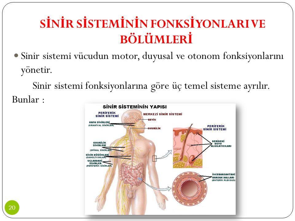S İ N İ R S İ STEM İ N İ N FONKS İ YONLARI VE BÖLÜMLER İ Sinir sistemi vücudun motor, duyusal ve otonom fonksiyonlarını yönetir. Sinir sistemi fonksiy