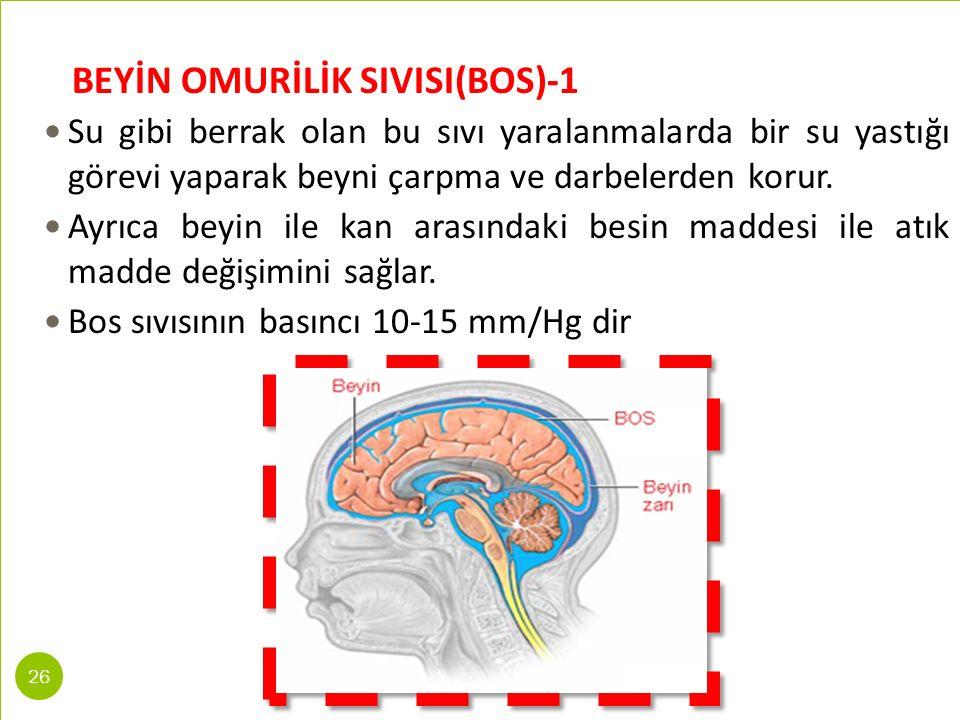 BEYİN OMURİLİK SIVISI(BOS)-1 Su gibi berrak olan bu sıvı yaralanmalarda bir su yastığı görevi yaparak beyni çarpma ve darbelerden korur. Ayrıca beyin