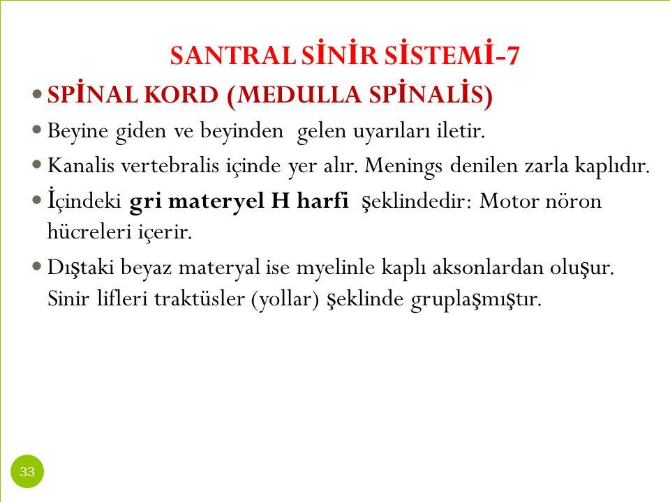 SANTRAL S İ N İ R S İ STEM İ -7 SP İ NAL KORD (MEDULLA SP İ NAL İ S) Beyine giden ve beyinden gelen uyarıları iletir. Kanalis vertebralis içinde yer a