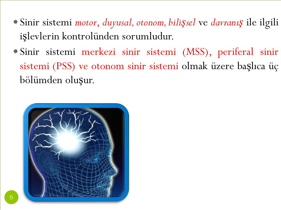 Sinir sistemi motor, duyusal, otonom, bili ş sel ve davranı ş ile ilgili i ş levlerin kontrolünden sorumludur. Sinir sistemi merkezi sinir sistemi (MS