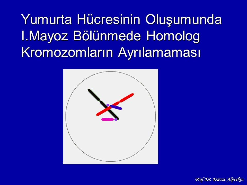 Yumurta Hücresinin Oluşumunda I.Mayoz Bölünmede Homolog Kromozomların Ayrılamaması Prof.Dr. Davut Alptekin