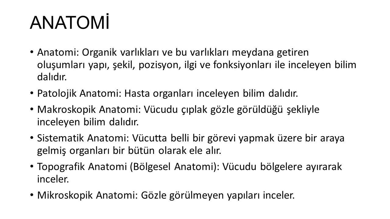ANATOMİ Anatomi: Organik varlıkları ve bu varlıkları meydana getiren oluşumları yapı, şekil, pozisyon, ilgi ve fonksiyonları ile inceleyen bilim dalıdır.