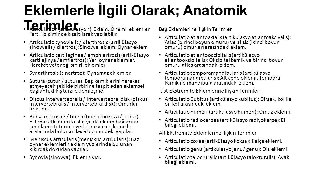 Eklemlerle İlgili Olarak; Anatomik Terimler Articulation (artikülasyon): Eklem.