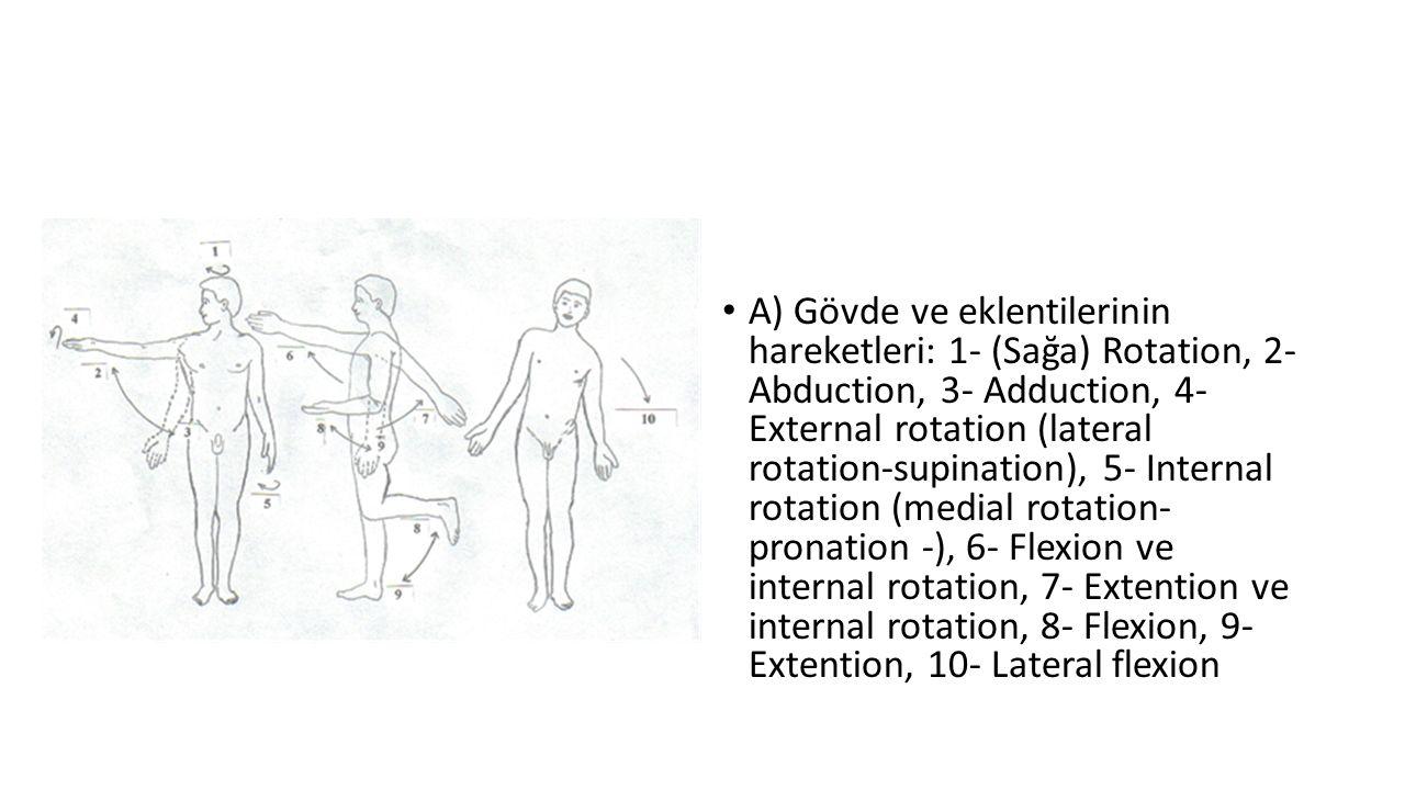 A) Gövde ve eklentilerinin hareketleri: 1- (Sağa) Rotation, 2- Abduction, 3- Adduction, 4- External rotation (lateral rotation-supination), 5- Internal rotation (medial rotation- pronation -), 6- Flexion ve internal rotation, 7- Extention ve internal rotation, 8- Flexion, 9- Extention, 10- Lateral flexion