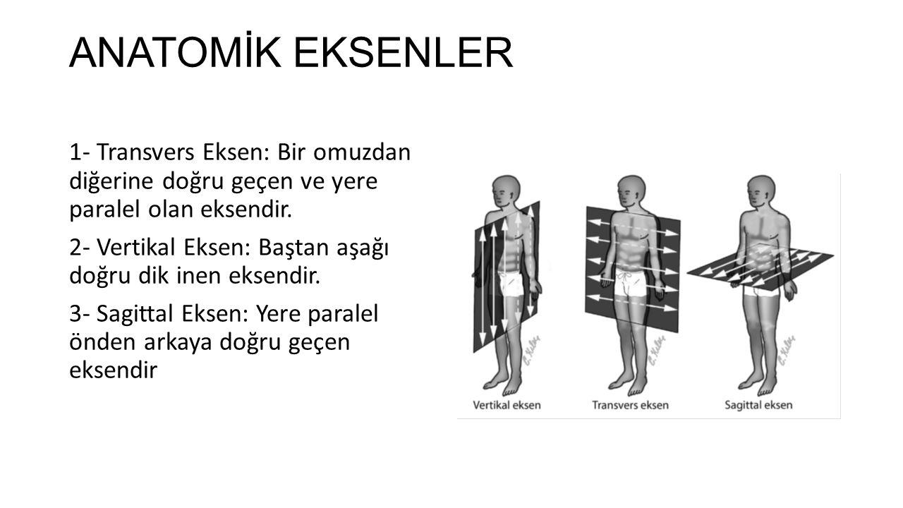 ANATOMİK EKSENLER 1- Transvers Eksen: Bir omuzdan diğerine doğru geçen ve yere paralel olan eksendir.
