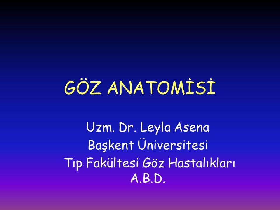 GÖZ ANATOMİSİ Uzm. Dr. Leyla Asena Başkent Üniversitesi Tıp Fakültesi Göz Hastalıkları A.B.D.