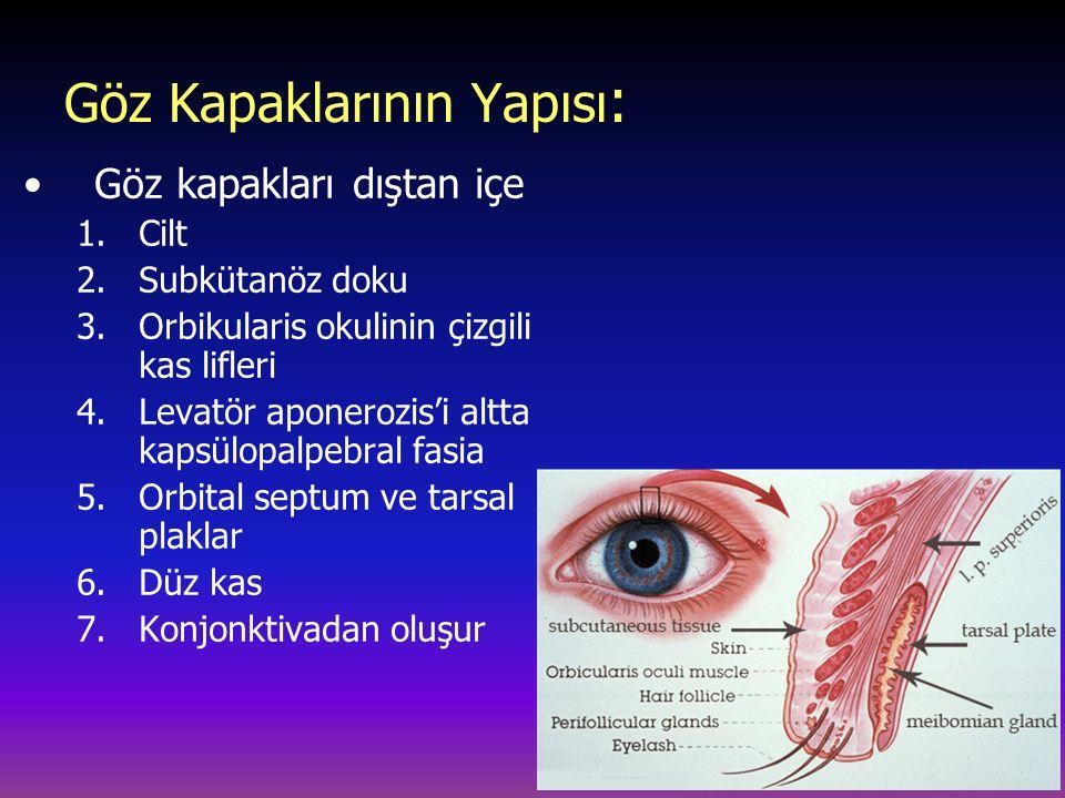 Göz Kapaklarının Yapısı : Göz kapakları dıştan içe 1.Cilt 2.Subkütanöz doku 3.Orbikularis okulinin çizgili kas lifleri 4.Levatör aponerozis'i altta kapsülopalpebral fasia 5.Orbital septum ve tarsal plaklar 6.Düz kas 7.Konjonktivadan oluşur