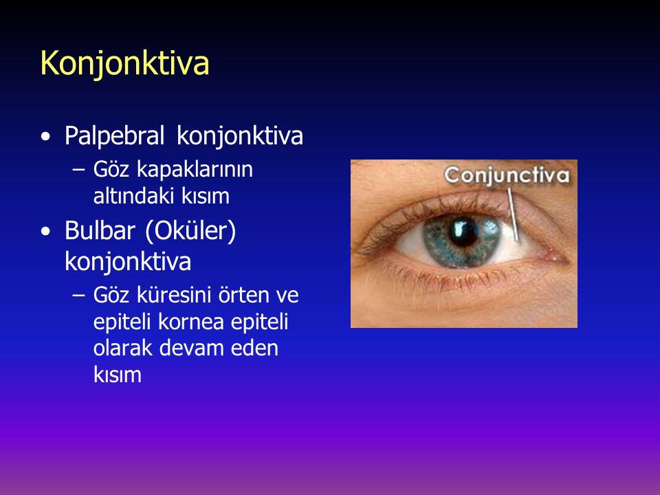 Konjonktiva Palpebral konjonktiva –Göz kapaklarının altındaki kısım Bulbar (Oküler) konjonktiva –Göz küresini örten ve epiteli kornea epiteli olarak devam eden kısım
