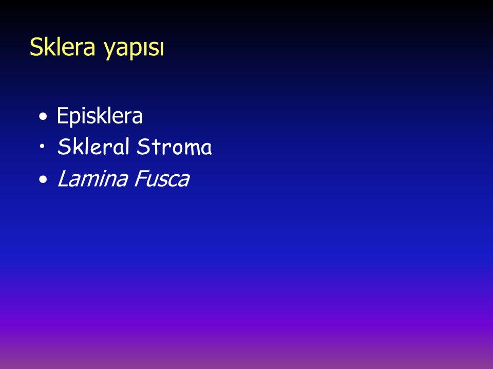 Sklera yapısı Episklera Skleral Stroma Lamina Fusca