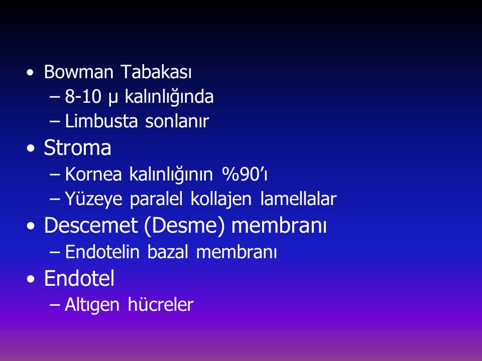 Bowman Tabakası –8-10 µ kalınlığında –Limbusta sonlanır Stroma –Kornea kalınlığının %90'ı –Yüzeye paralel kollajen lamellalar Descemet (Desme) membranı –Endotelin bazal membranı Endotel –Altıgen hücreler